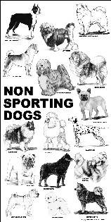 Poster - non-sporting dogs