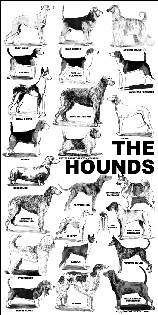 Poster - hounds