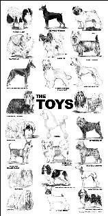 Poster - toys