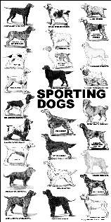 Poster - All About Dog Shows
